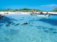 Galapagos Clasico
