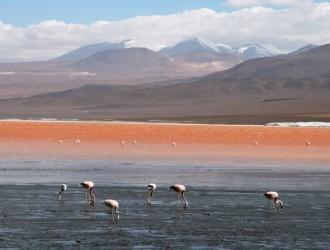 Bolivia Fugaz